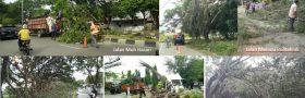 DLHK3 Membersihkan 7 Pohon Tumbang dalam Sehari